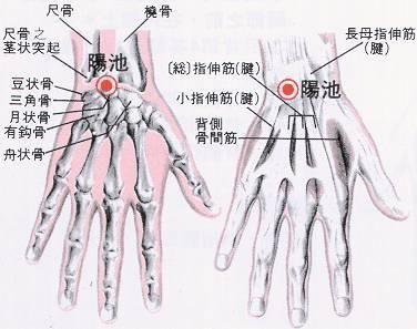状 尺骨 突起 茎 尺骨遠位端単独骨折は手術か保存治療が可能か