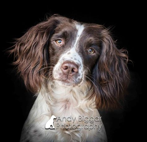 commercialdogphotographer Here is another photo from...