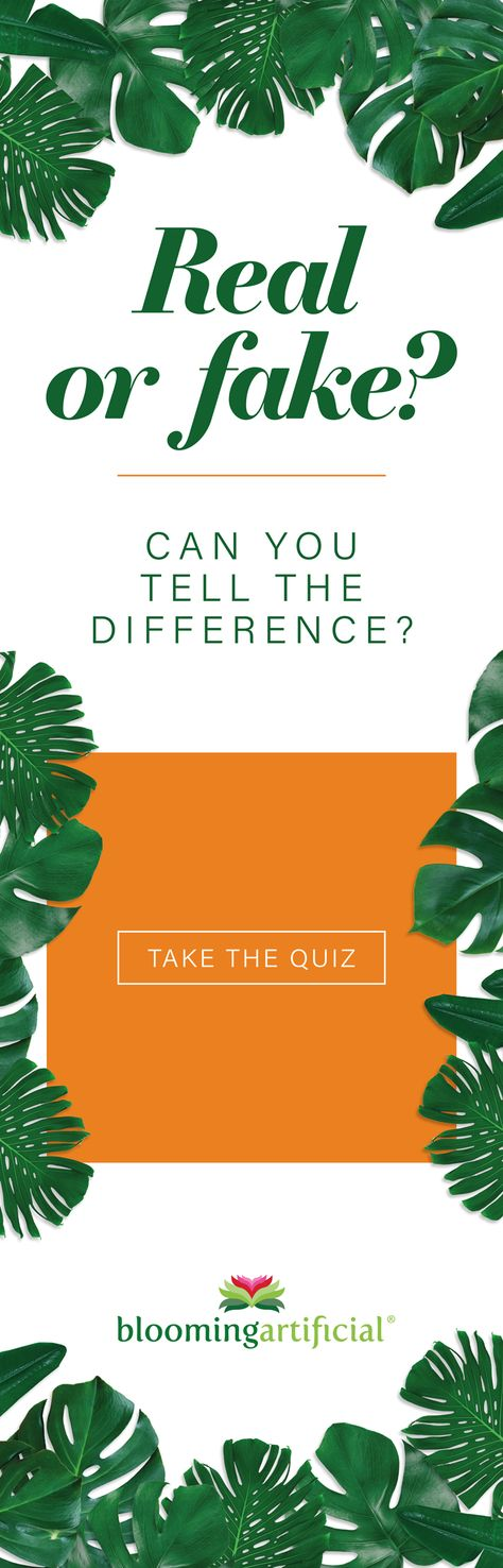 Think you can spot the difference between natural and artificial plants? Test yourself, compare your score and challenge your friends with our Real Vs Fake Quiz!  #bloomingartificial #artificialplants #fakeplants #fauxplants #realvsfake #spotthedifference #quiz #artificialflowers #fauxflowers #fakeflowers