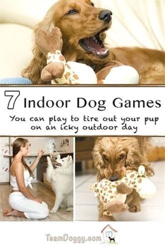 10 Pro Tips For Dog Training By Experts Dog Activities Dog