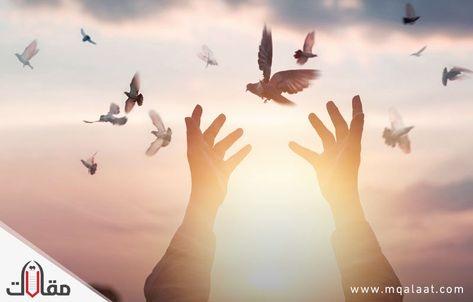 موضوع عن التفاؤل In 2020 Release Dove Doves Animals