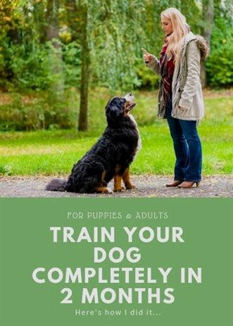 Dog Training Bells Petsmart Dog Training Prices Dog Training