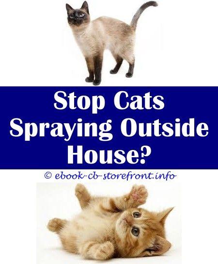 12 Unbelievable Cat Spraying Ideas Admirable