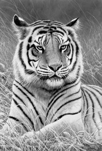 New Drawing Animals Tiger Coloring Pages 54 Ideas Grayscale Coloring Animal Drawings Tiger Art