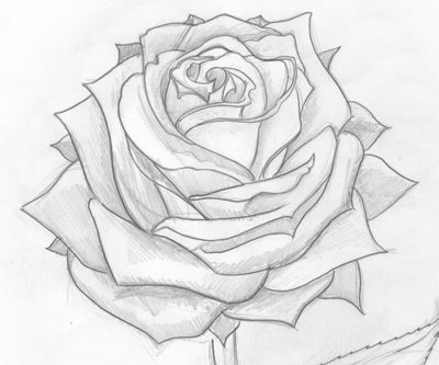 Rose drawings in pencil maybe a tattoo idea