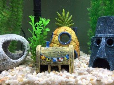 SpongeBob House, Squidward House, Krusty Krab Shop