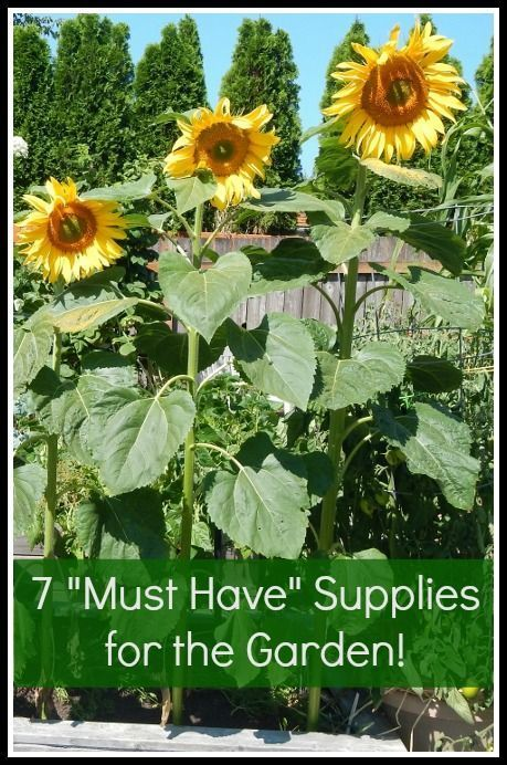 7 Gardening Supplies I Couldn T Live Without The Coupon Project