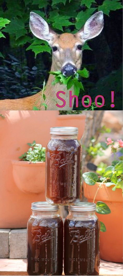 DIY Organic Deer Deterrent