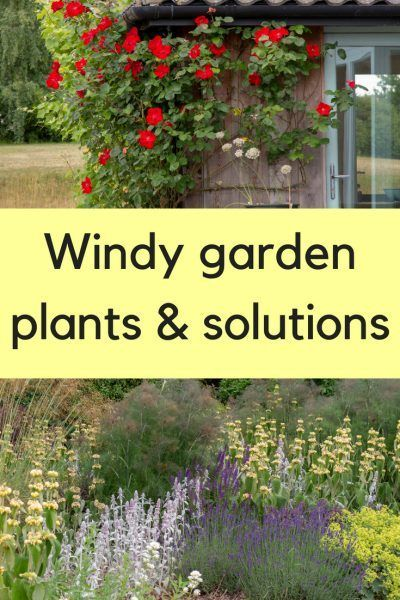 The Best Windy Garden Plants And Solutions In 2020 With Images