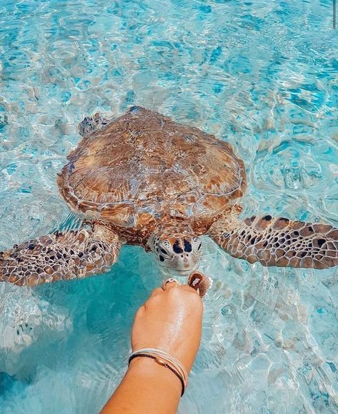 Mar 2019 - Puppies and kittens aren't the only cute animals in nature. Why would humans find baby animals cute to look at, Beach Aesthetic, Summer Aesthetic, Blue Aesthetic, Travel Aesthetic, Cute Little Animals, Cute Funny Animals, Cute Turtles, Baby Turtles, Photo Wall Collage