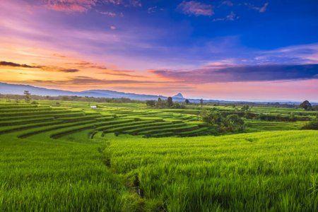 Luas Pemandangan Sawah Di Utara Bengkulu Ketika Hijau Beras Dan Langit Pagi  | Pemandangan, Pemandangan Anime, Langit