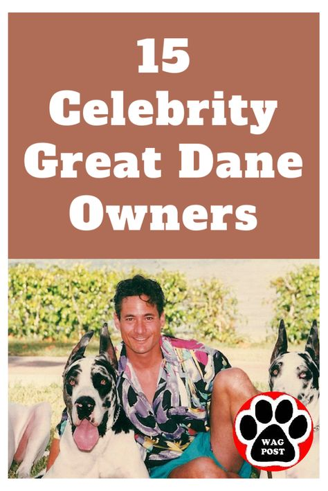 15 Celebrity Great Dane Owners Celebrities Puppy Love Dog Training