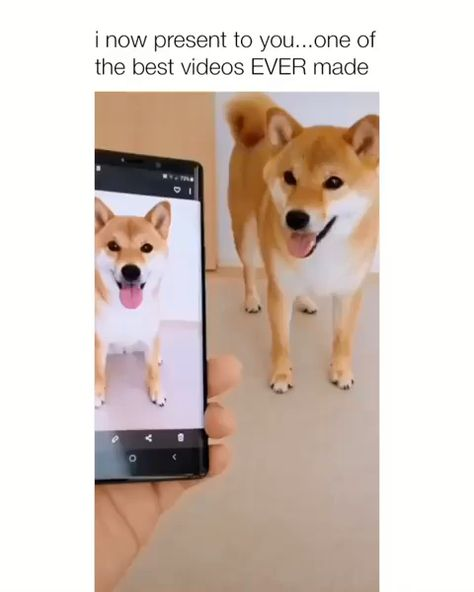 This Pin was discovered by Serenity N. Discover (and save!) your own Pins on Pinterest. ... dogs bring me so much happiness 😭. More information.#dogsfunny #dogscute #dogsamazing