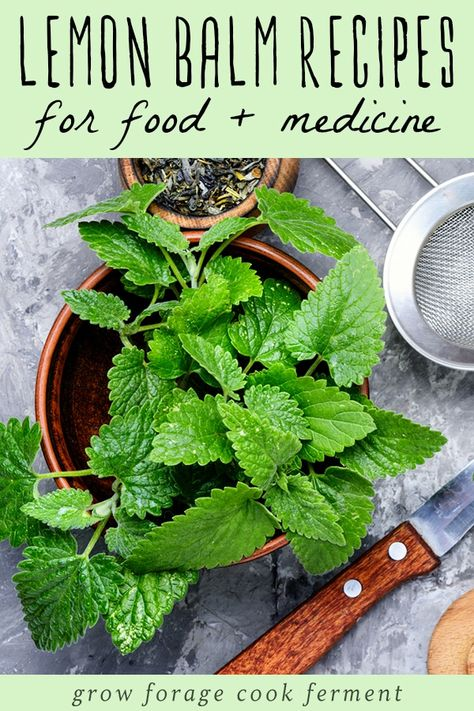 Lemon Balm Recipes: food, drinks, remedies, + more! Got lemon balm? Here are over 30 delicious lemon balm recipes to help you use all of this edible and medicinal herb growing in your yard! Lemon Balm Recipes, Lemon Balm Uses, Herb Recipes, Organic Recipes, Recipes Dinner, Soup Recipes, Healing Herbs, Medicinal Herbs, Herbal Plants