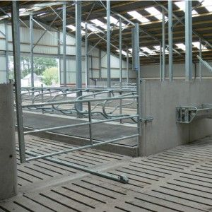Cattle Housing Accessories From O Donovan Engineering Cattle Housing Cow Shed Design House