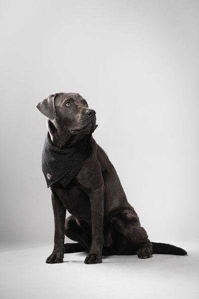 Soki Kassel Soki Hunde Halstuch Aus Bio Baumwolle In 2020 Dog Scarfs Labrador Retriever Kassel