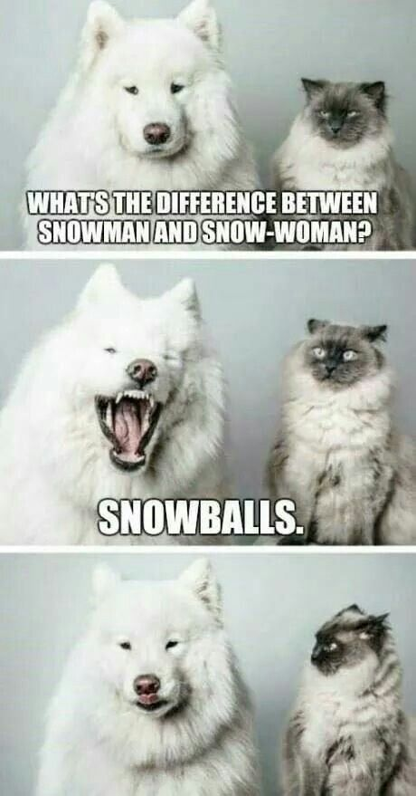 Winter Is Coming Funny Animal Memes Funny Animal Jokes Funny Dog Memes