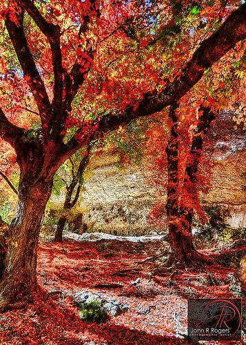 Crimson+Carpet+of+Autumn+Leaves