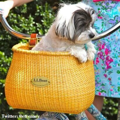 Sailor loves riding in her #LLBean bike basket via Twitter @ etrenary. #LLBeanPets