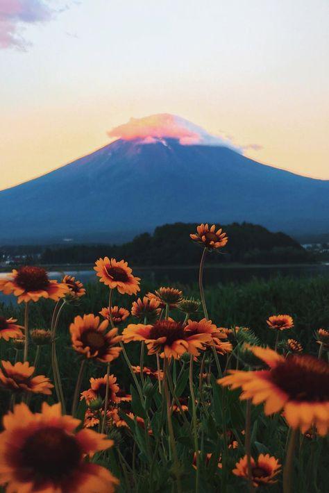 "heaven-ly-mind: "" Tokyo - Japan 東京 """