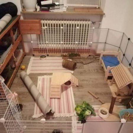 Innenhaltung Fotos Kaninchen Fotos Tiere