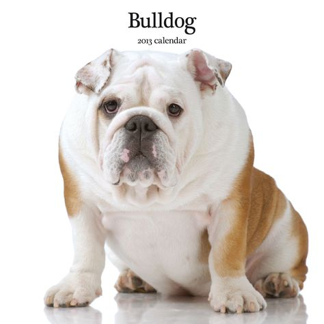 Magnet And Steel Bulldog Modern Wall Calendar Very Kind Of Your