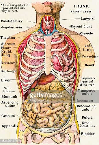 Diagram Of Human Body Organs Picture Of Body Organs Medical