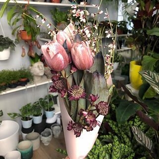 Czesc Wam W Ten Piekny Dzien Dzisiaj Nasza Dzungla Zakwitla Oprocz Super Doniczkowych Nowosci Mamy Dla Was Tez Przepieknej Urody Kwiaty Ciete Dla Ulatw Plants