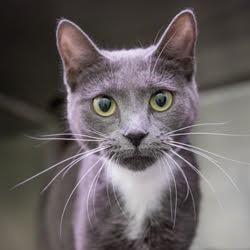 Pet Card Kitten Adoption Pets Saving Cat