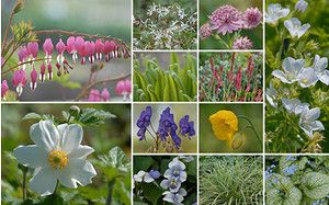 Allgaustauden 14er Kollektion Staudenglanz Im Halbschatten Bodendeckerrosen Hochstammrosen Und Rankende Pflanze