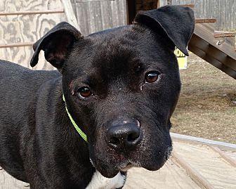Arf Vader Save A Pet Dogs Pets Adoption