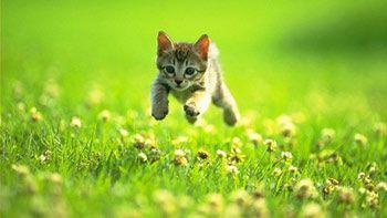 lancia cucciolo di gatto dal finestrino dell'auto,è caccia al criminale