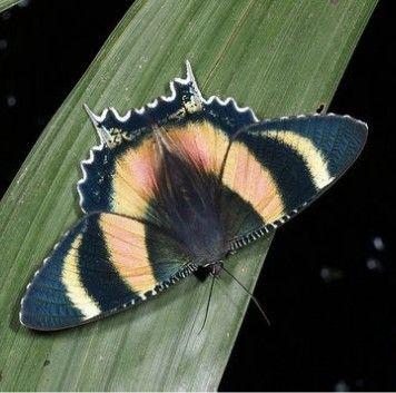 Pin Von Gabi Epple Auf Schmetterlinge Und Motten Schmetterling Insekten Falter