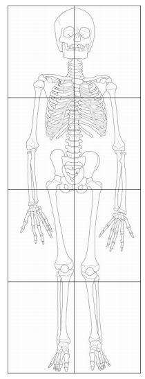 Dibujo a escala de esqueleto de niño, listo para imprimir y colorear. / Printable Scale Drawing of a Child Skeleton