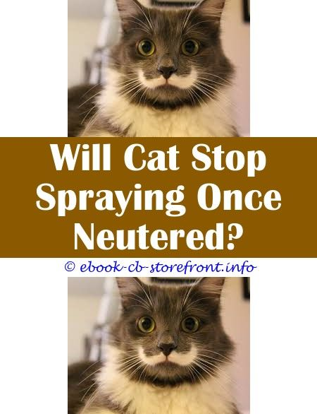 4 Easy Tricks Do You Have To Spray Your Cat Spray Hand To Prevent Cat Biting Is Spraying Cats With Water Bad Can My Cat Still Spray After Being Ne Toxoplasmosis