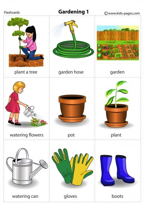 Garden Plants Names And Pictures Pdf