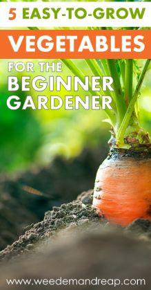 5 Easy-to-grow Vegetables for the Beginner Gardener #grow #planting #gardening