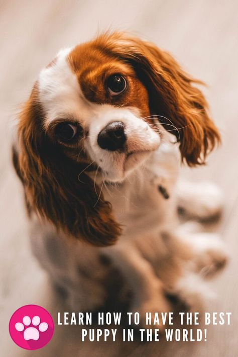 I really love dogs. But we all know that they can become unstoppable. How can we solve this problem? That's what I was wondering about until I discovered this effective training course for our dogs. Now our relationship has become better.Give it a try... #dog #puppy  #love #cute #pet #dogoftheday #doglover #puppies #puppylove #photooftheday #pets #photography #doggy #ilovemydog #animals #doglovers #rescuedog #animal #doglife