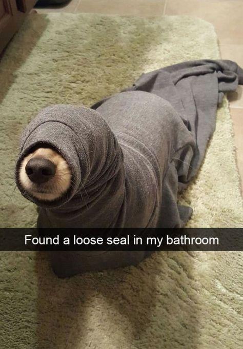 20 Hilarious Animal Snapchats