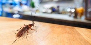 شركة مكافحة حشرات بجدة Termite Control Pest Control Garden Guide