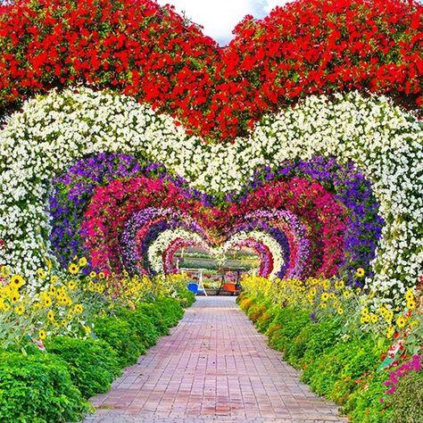 7th Season for Dubai Miracle Garden - Planteria
