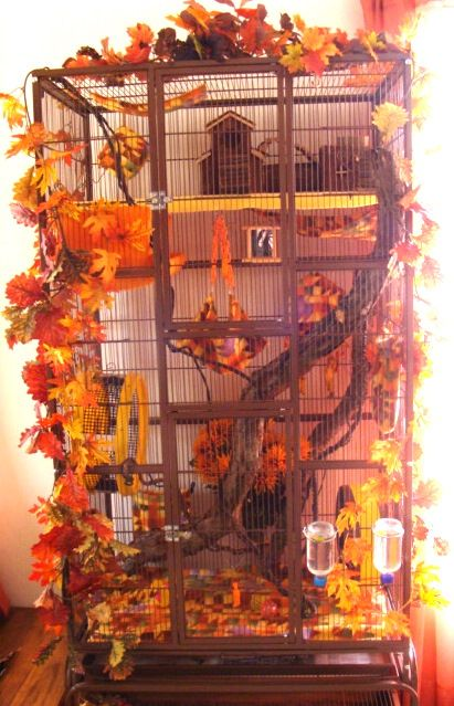 Love, love, love this autumn themed cage. I'm not sure how chinchilla safe the branches and leaves are but it looks beautiful. I'd love to replicate it with chinchilla safe materials. Chinchilla Cage, Ferret Cage, Hamster Cages, Sugar Glider Care, Sugar Glider Toys, Sugar Gliders, Sugar Glider Habitat, Pet Rat Cages, Pet Cage