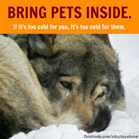 IMPORTANT: If you live in a part of the country that is impacted by the cold Winter weather, bring pets inside and keep an eye out for neighbors' pets, too. If it's too cold for us, it's too cold for them! #polarvortex #instawinter #winter #wintertime #snow #itscold #itscoldoutside #important #danger #dogsofinstagram #dogs_of_instagram #pets #petstagram #blizzard #animalwelfare #toocold #warning #ilovedogs #neighborhood #animals #outsidedog #help #like