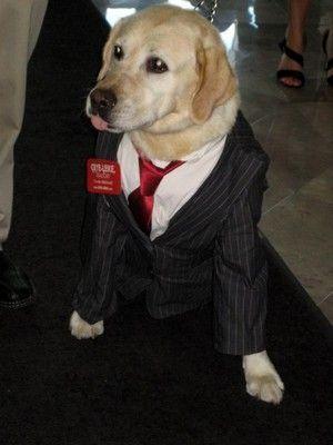 Labrador Retriever Dog Costume Labrador Retriever Dog Costumes