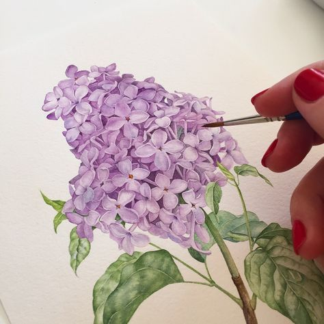Lilac Botanical Illustration With Watercolor Watercolor Flowers Tutorial Watercolor Illustration Watercolor Tulips
