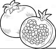 Image Result For Pomegranate Clip Art Black And White