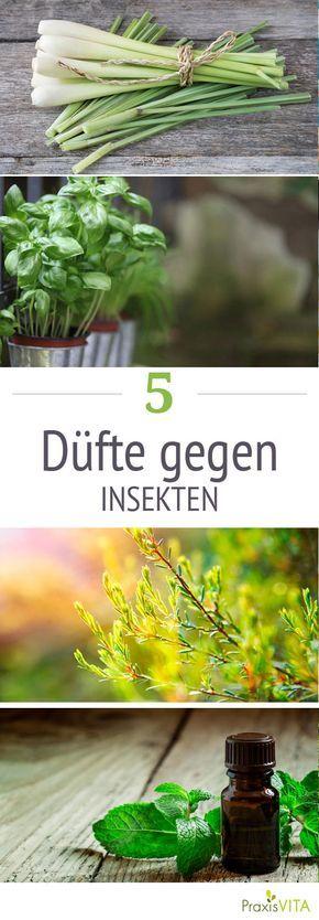5 Dufte Die Insekten Ganz Besonders Hassen Insekten Pflanzen Gegen Mucken Und Ameisen Im Garten