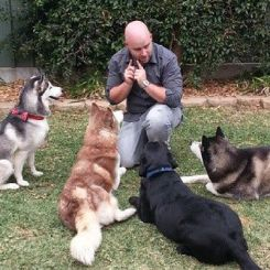 Scott Mcguinness Is A Professional Canine Trainer And Behaviourist