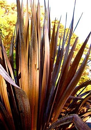 Unusual Houseplant Seeds From Around The World House Plants