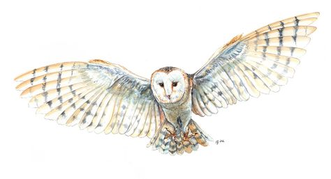owl drawing 1 tattoos pinterest tattoo posters owl drawings and tattoo